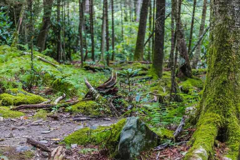 Moss cover trail and trees on Tranquil Trails