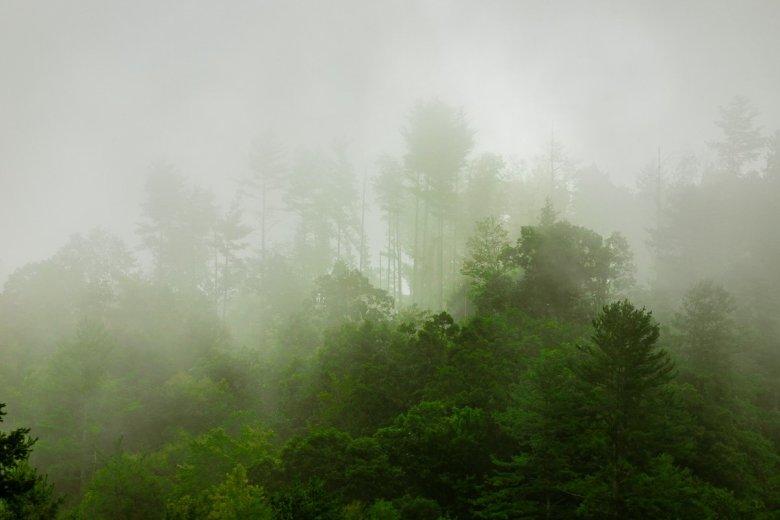 Trees of the Smoky Mountains Peaking Through Dense Fog
