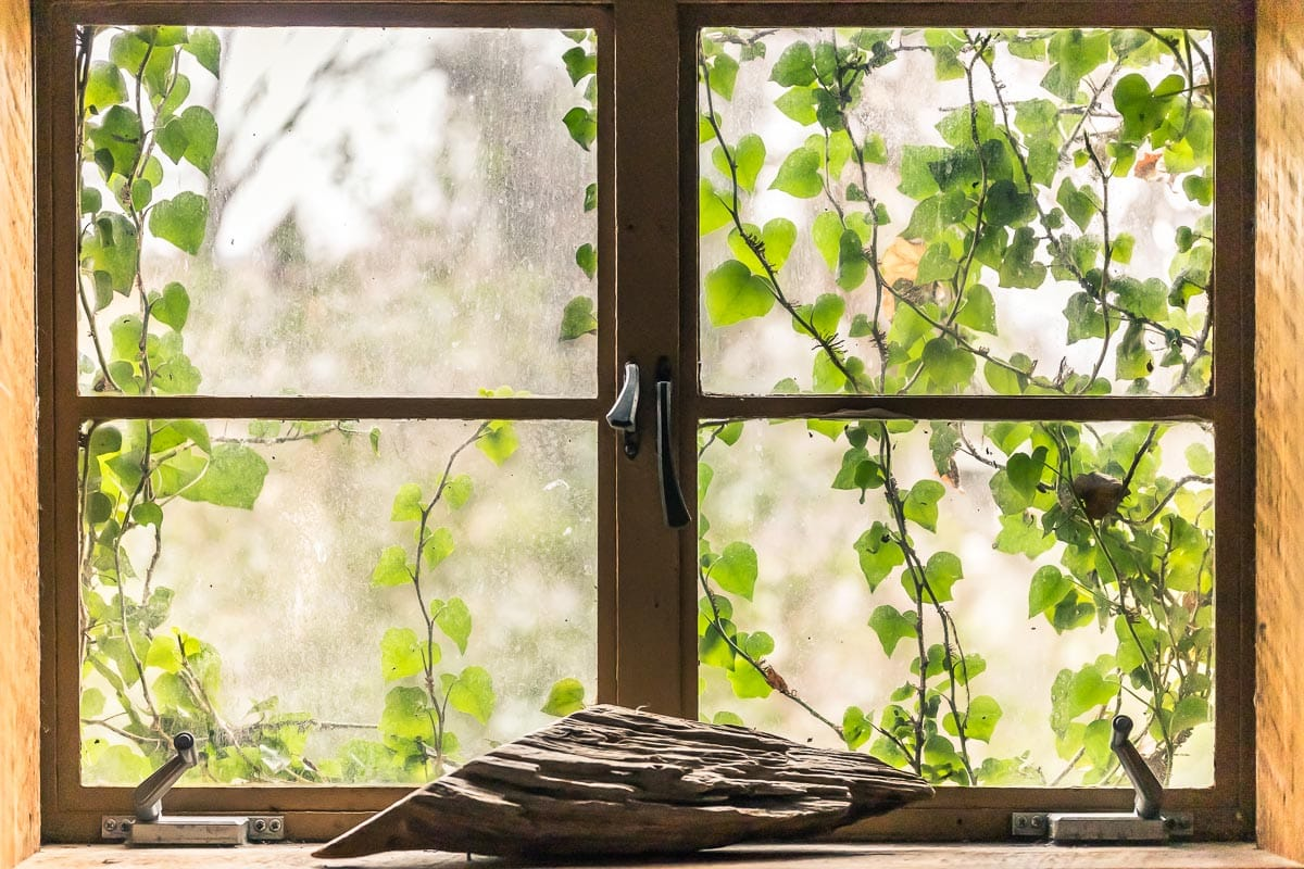 Dreamy Window Covered In vines