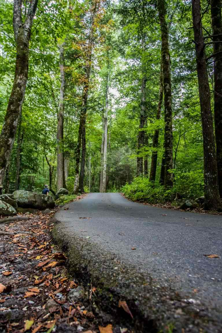 open road curves through the trees in the Great Smoky Mountains
