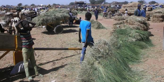 Une bourse du foin à Guassel au Niger.