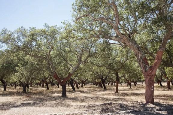 corkwood-near-comporta-area-in-portugal