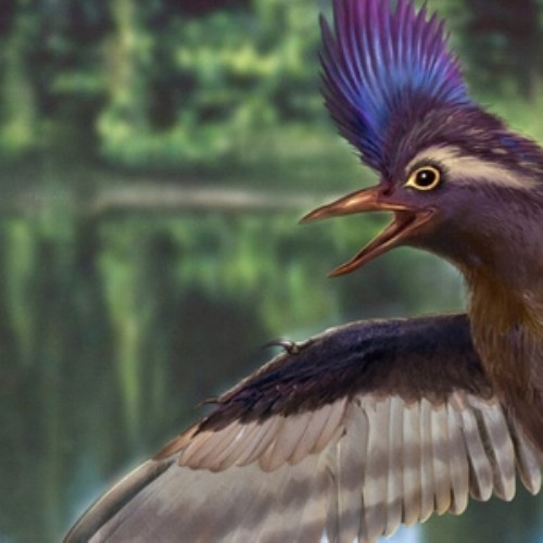 Archaeornithura meemannae the oldest birds ancestors