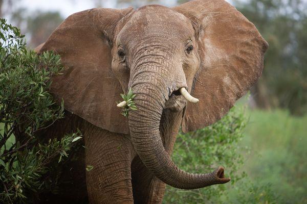 Elephant Poaching Hotspots
