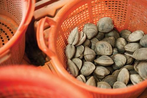 """Oysters tank barnegat bay colony"""