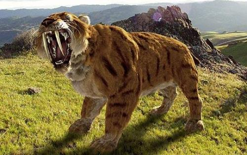 """""""Saber-Toothed Cat biting"""""""