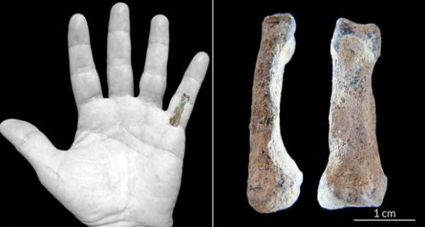 """2 million year old pinky found in tanzania"""