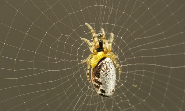 Wasps Can Turn Spiders into Zombies