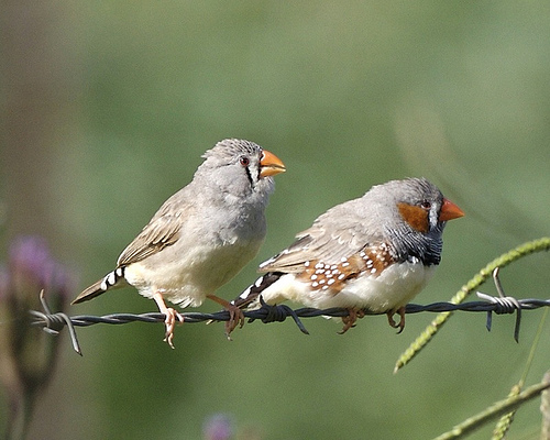 Birds That Fall In Love