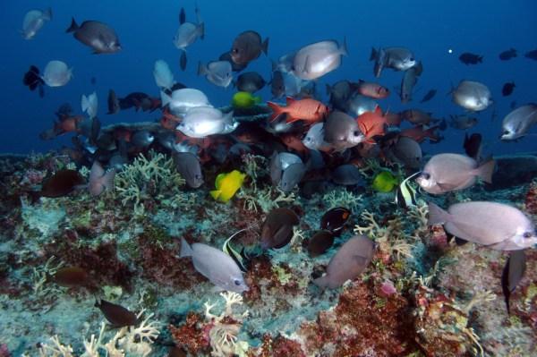 """""""marine national monument to be set in cashes ledge"""""""
