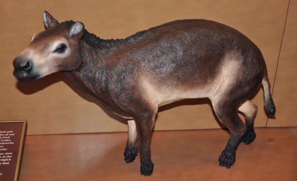 """Eurohippus messelensis horse uterus"""