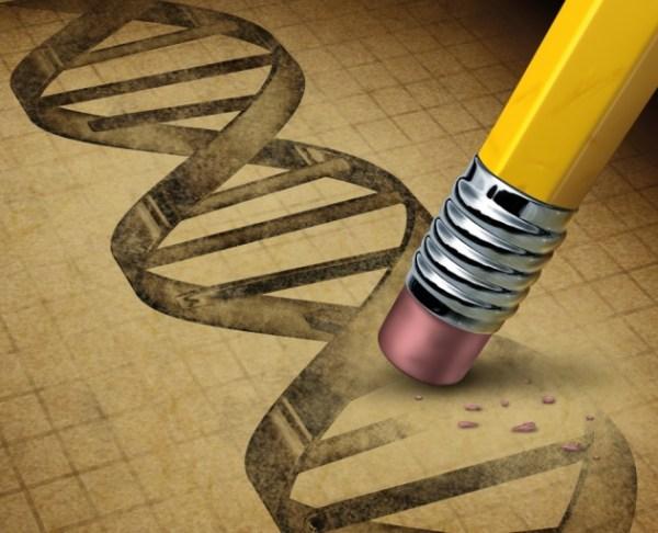 """gene editing on pigs"""