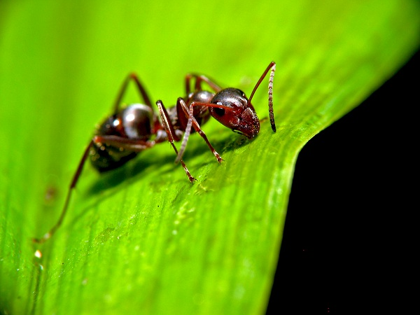 An ant on a leaf