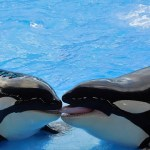 Scientists Reveal Why Female Killer Whales Experience Menopause