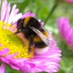 A Bee Map Indicates The Decline of Pollinators' Population