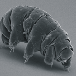 Water Bears Are Able to Survive Without Water