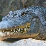 Orlando Girl Escapes Alligator Bite by Using Clever Trick