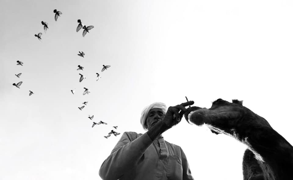 © Dimpy Bhalotia