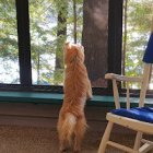 Freedom, Flexibility, and Other Twisted Notions about Self-Employment