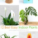12 Best Air Purifying Indoor Plants You Won T Kill A Piece Of Rainbow