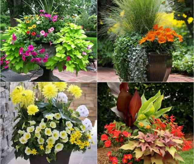 Stunning Container Garden Designs With Plant List For Each And Lots Of Inspirations Learn