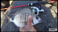 rockfishing-sargo (2)