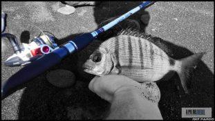 Sargo-rockfishing1