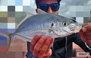 jurel-Rockfishing-sparidae
