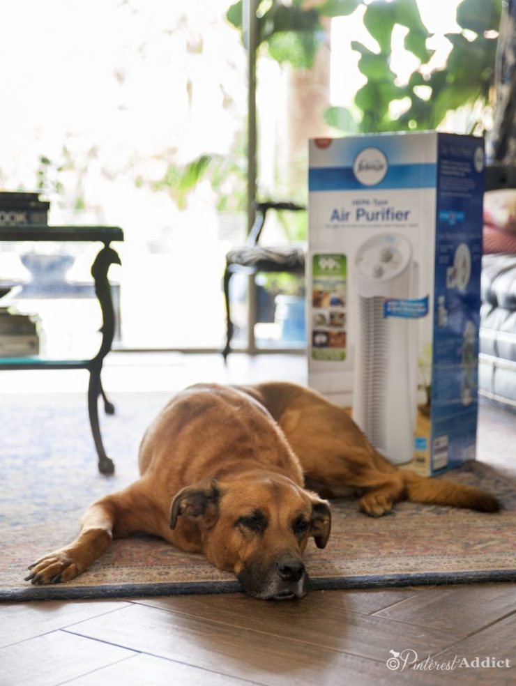 Febreze air purifier - clean stinky smells from your house, don't just cover them up