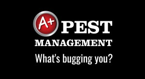 A plus pest management - What's bugging you?