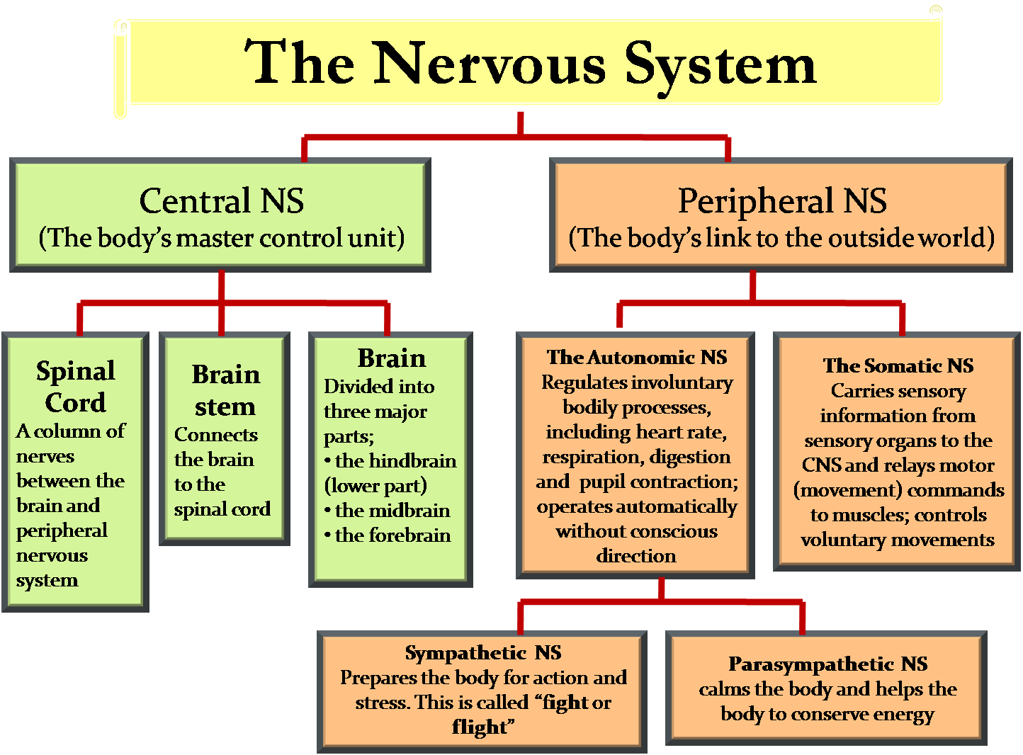 The Nervous System And Sense Organs Icse Solutions For Class 10