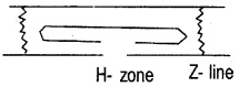 HSSLiVE Plus One Zoology Chapter Wise Previous Questions Chapter 6 Breathing and Exchange of Gases 4