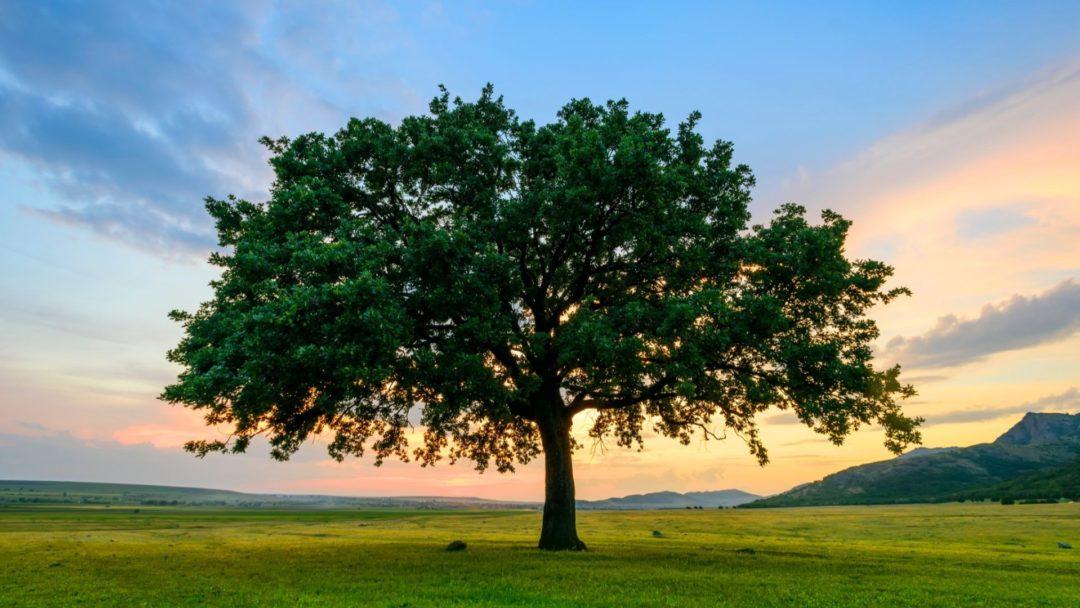 Essay on Save Trees