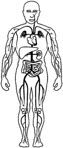 Human Body Essay