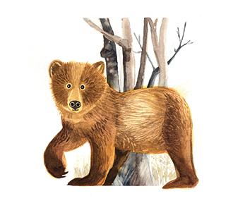 Krafttier - Bär