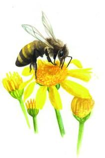 Entdecke dein Krafttier - Biene