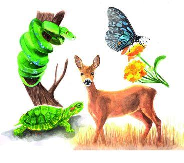 Übersicht über die Krafttiere Schlange, Schildkröte, Reh und Schmetterling