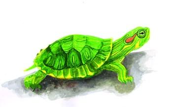 Entdecke dein Krafttier - Schildkröte