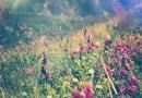 Wenn der Frühling zur Plage wird! Die Nase rinnt, das Auge juckt