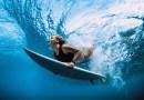 Ohrenschmerzen: Wie Sie gesund und fit durch den Sommer tauchen