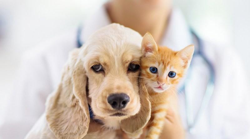 Hund und rot getiegerte Katze kuscheln. Hund und Katze sind Freunde. Immunsystem Tiere