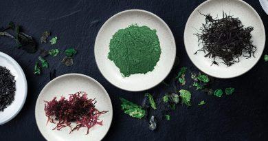 Alleskönner Algen: Vom Superfood zum Virenschutzschild