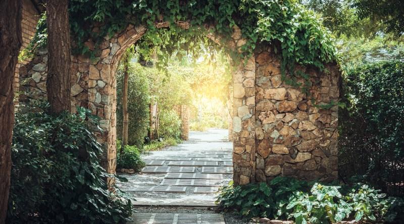 Efeu wächst über Torbogen. Steinmauer. Heilpflanze Efeu