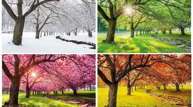 Die vier Jahreszeiten dargestellt mit einem Baum. Frühling, Sommer, Herbst und Winter. Immunsystem und Jahreszeiten
