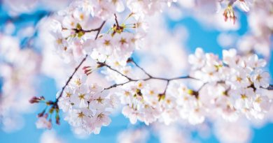 Frühling auf der Haut