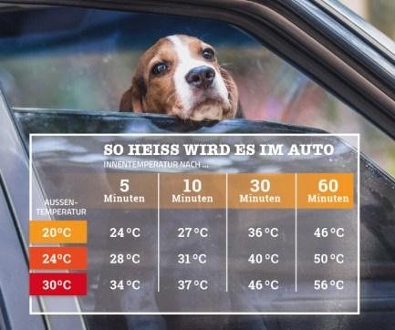 Hund im Auto. Tabelle: Hitzeanstieg im Auto. Vergleich Außentemperatur vs. Innentemperatur im Auto. Sommer. Tiergesundheit im Sommer