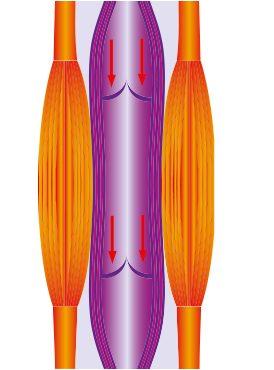 Grafik eines entspannten Muskels. Wadenmuskel. Blut fließt nach unten.