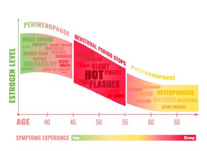 Grafik. Die drei Phasen der Menopause und ihre Symptome. Perimenopause. Menopause, Postmenopause. Hitzewallungen, Schweißausbrüche. Wechseljahre. Phasen der Wechseljahre