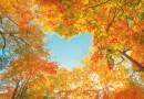 Dank Vitamin D gesund durch den Herbst