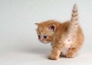 chaton fesses
